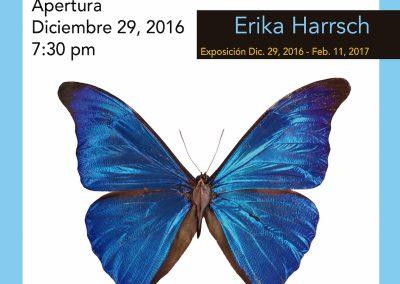 20161229Erika HarrschWEB